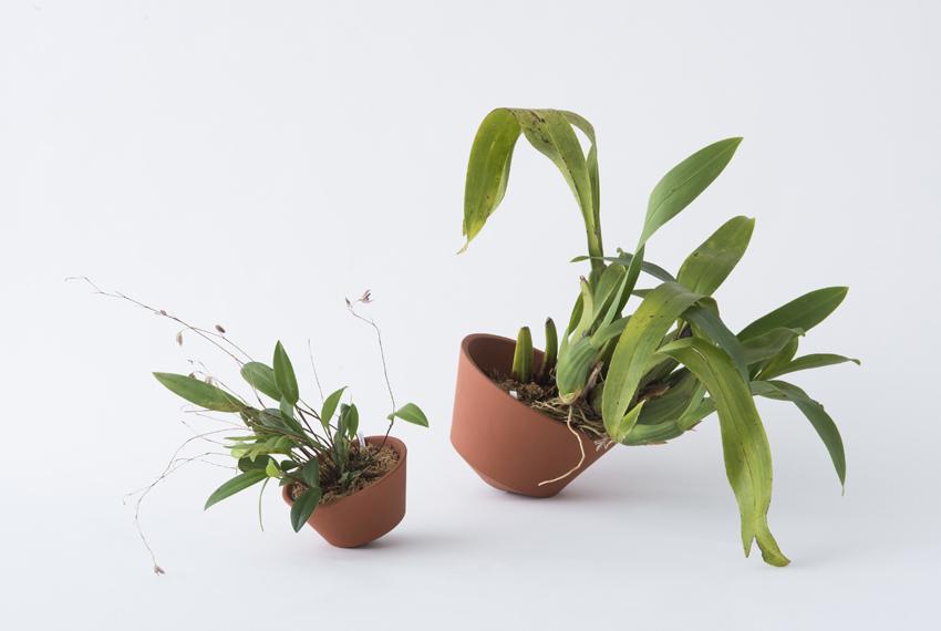 orchid pot 3