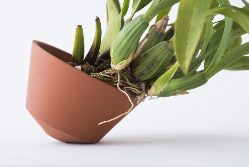 orchid pot 2